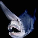 暑さを忘れさせてくれる深海生物 画像集
