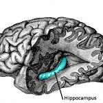 運動すると頭が良くなる!脳細胞も増えると判明!