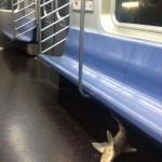 アメリカの地下鉄でサメが発見される!
