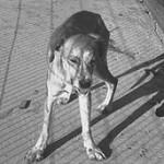 狂犬病、日本に上陸する可能性