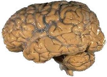 Human brain NIH 「嫌な上司」の原因は脳と権力?カナダの研究で驚愕の事実が発覚!