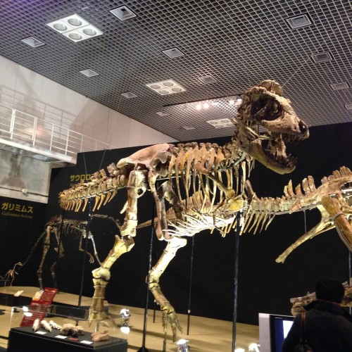 157 500x500 タルボサウルス!アジア最大の獣脚類!