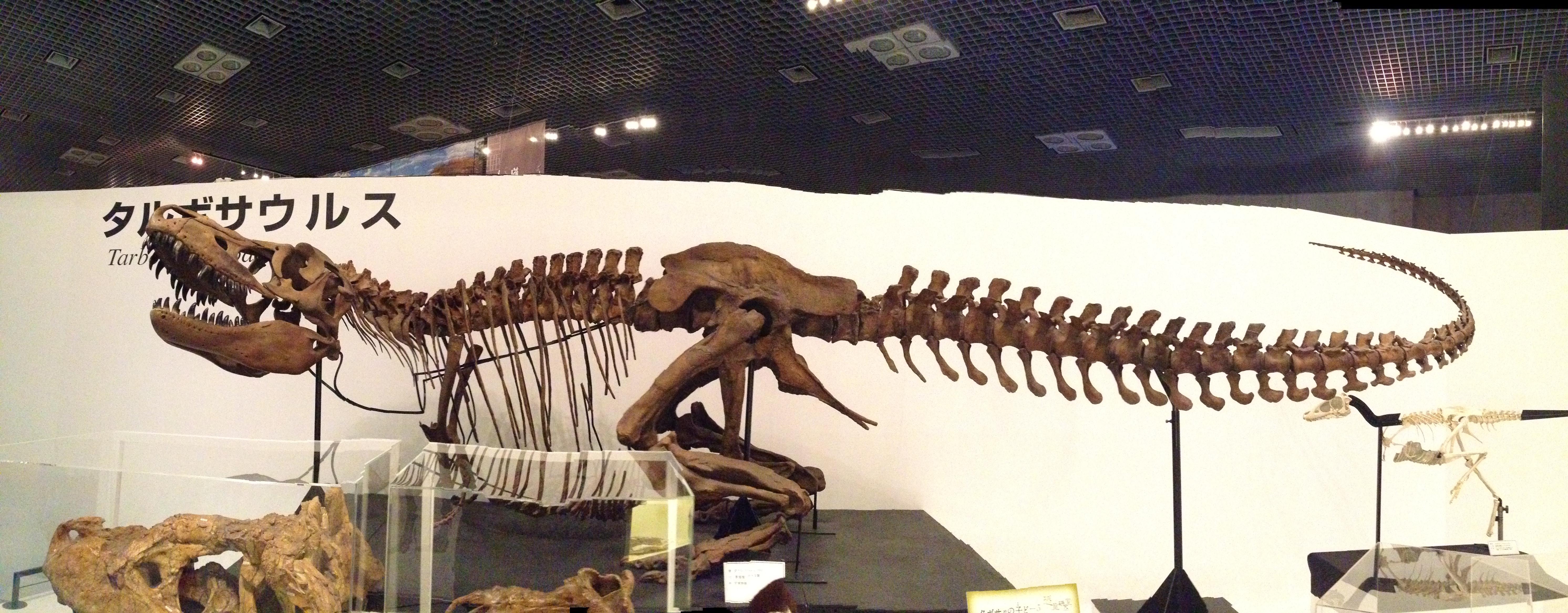 170 タルボサウルス!アジア最大の獣脚類!
