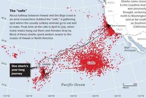 8ba8958bc2white shark cafe ホホジロザメが大量に生息する海域、ホホジロザメカフェ!