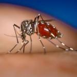 蚊が運んでくる感染症や病気。海外旅行では特に注意!