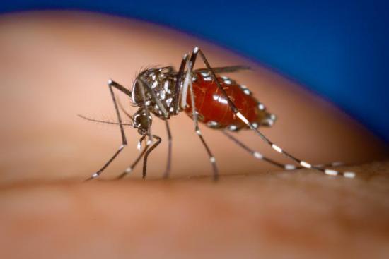 Report on Dengue Fever 蚊が運んでくる感染症や病気。海外旅行では特に注意!