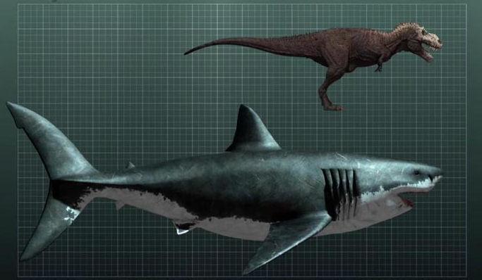 megalodon shark メガロドン、今なお生存が噂される、かつて海を支配した最強の巨大ザメ!