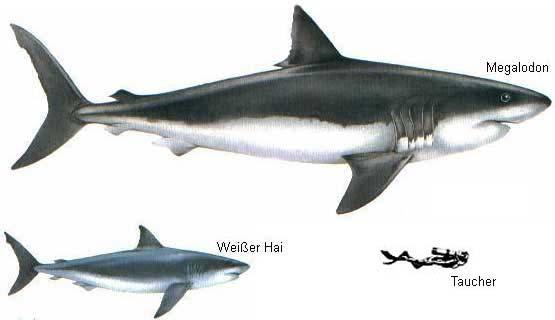 megalodon weisserhai メガロドン、今なお生存が噂される、かつて海を支配した最強の巨大ザメ!