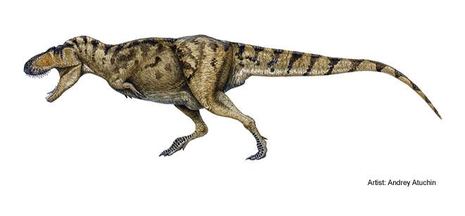 mm tarbosaurus illustration big 1 タルボサウルス!アジア最大の獣脚類!