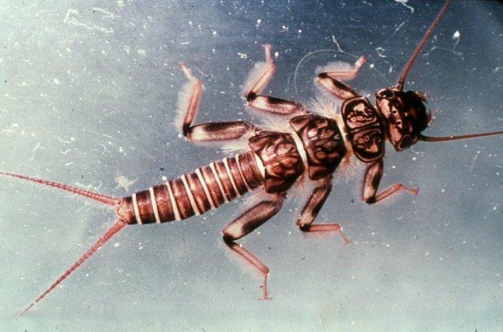 06 世界の食虫文化。実はエコな昆虫食。