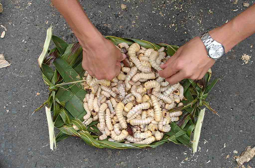 368606501 5b39add42b 世界の食虫文化。実はエコな昆虫食。