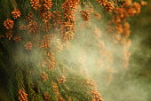 96589504 花粉症、2014年春は例年に比べてスギ・ヒノキ花粉が全国的に少なくなる模様!