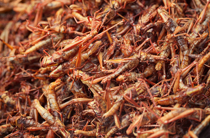 Depositphotos 19291053 xs 世界の食虫文化。実はエコな昆虫食。