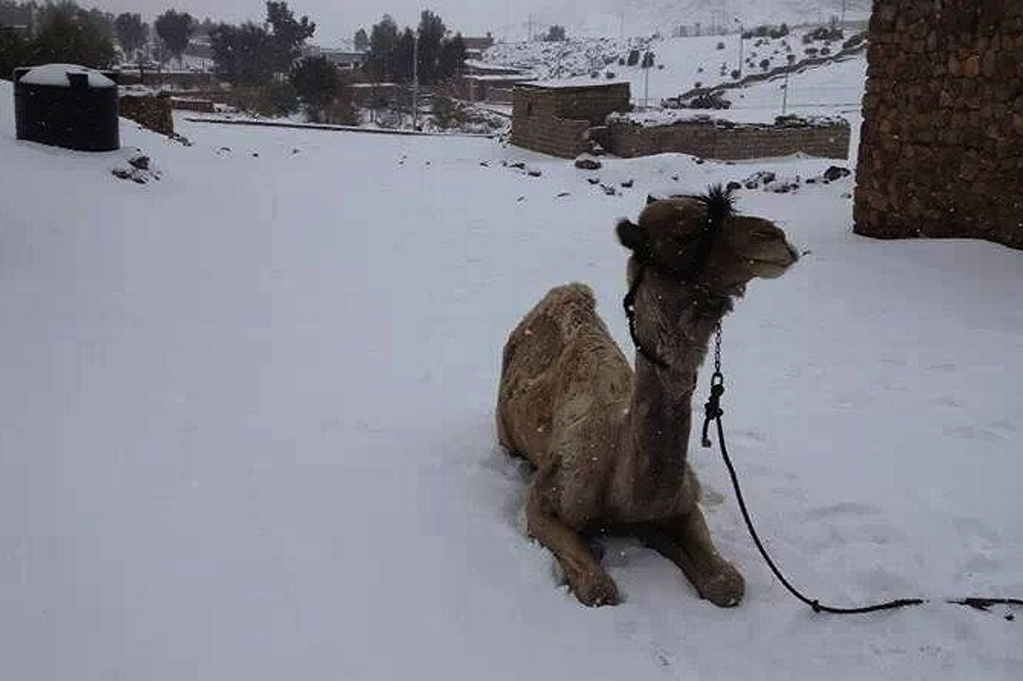 Picture 22 2923462 エジプトにも雪が降る?日本人の知らない意外な事実!