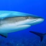 サメに襲われても気付かなかった?オーストラリアで珍事件が!
