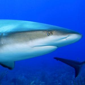 survive shark attack 300 サメに襲われても気付かなかった?オーストラリアで珍事件が!