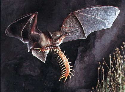 tumblr lvk117E2zy1r5xvz0o1 500 コウモリの住む洞窟の驚くべき実態!ゴキブリなどが群がるその場所は、想像するだけで鳥肌が…