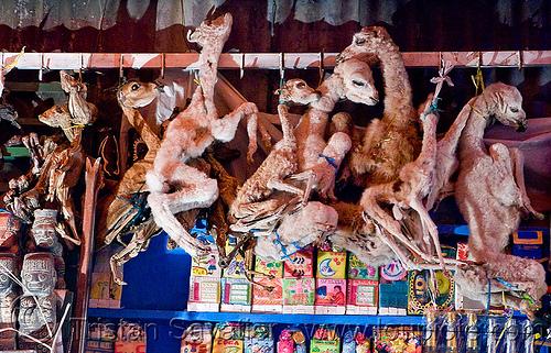 5055763513 mummified llama fetuses witch market la paz bolivia 世にも奇妙な商品が並ぶ魔女市場、ボリビア首都ラパス。
