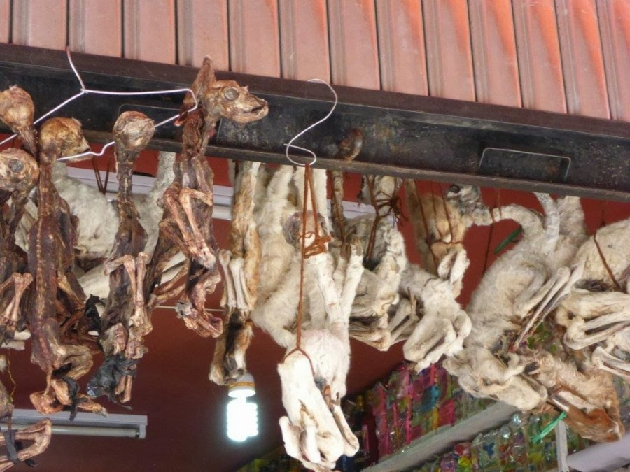 BOL 115 900x675 世にも奇妙な商品が並ぶ魔女市場、ボリビア首都ラパス。