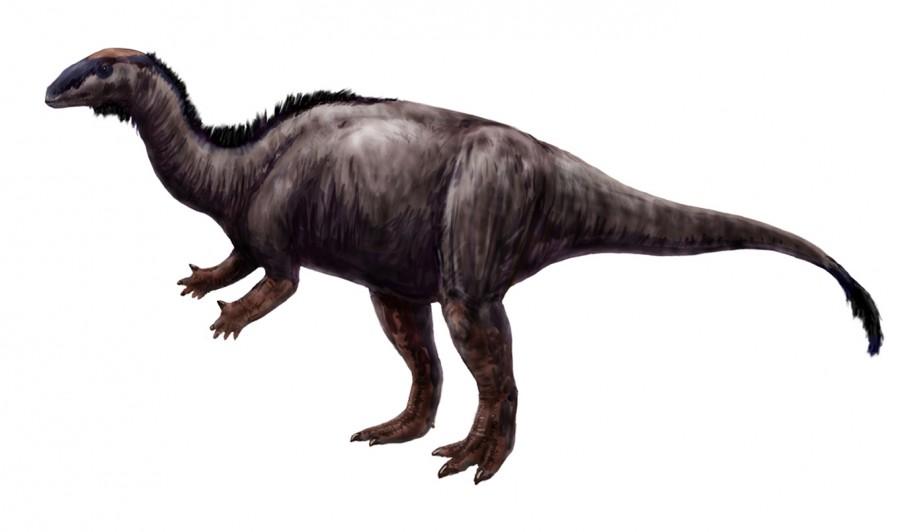 Camptosauru 900x532 北海道で新種の恐竜が発見された可能性!ハドロサウルスの全身骨格か。