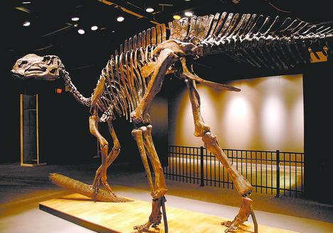 Hadrosaurus Foulkii 北海道で新種の恐竜が発見された可能性!ハドロサウルスの全身骨格か。