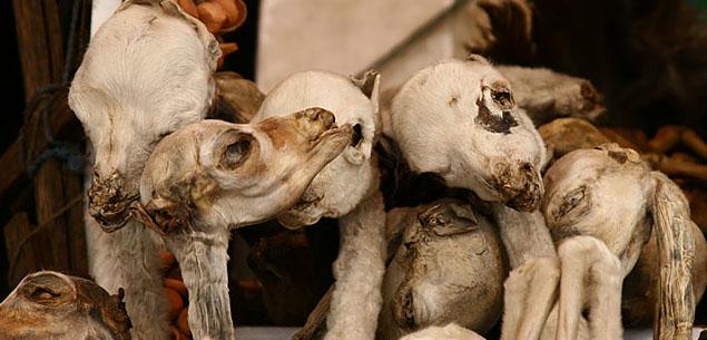 WitchesMarket DarinkaMaya 世にも奇妙な商品が並ぶ魔女市場、ボリビア首都ラパス。