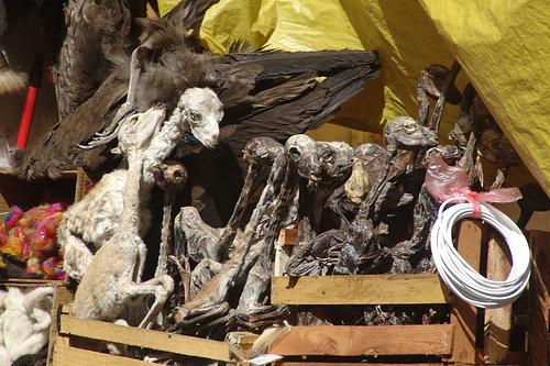 dried llama foetuses witches market la paz bolivia1 世にも奇妙な商品が並ぶ魔女市場、ボリビア首都ラパス。