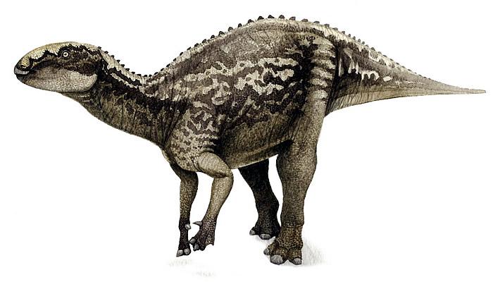 fukuisaurus 北海道で新種の恐竜が発見された可能性!ハドロサウルスの全身骨格か。