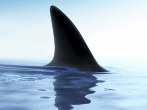 shark fin water 1234 n2 オーストラリア西部でサメの駆除解禁!環境保護団体の反発は避けられず。