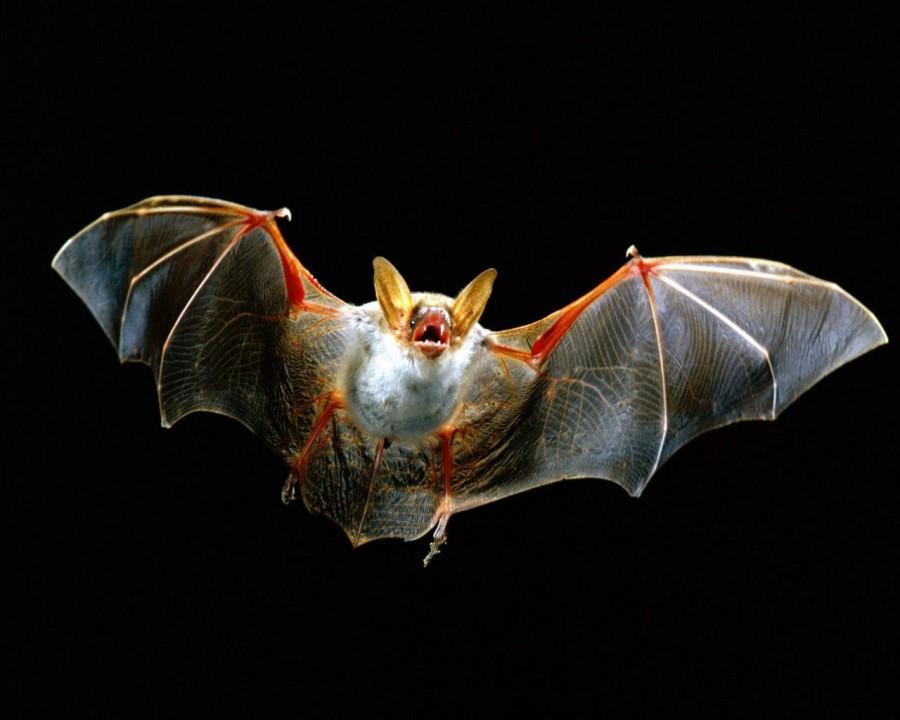 1473 900x720 ヨーロッパでコウモリが増加傾向!20年で40%増える!