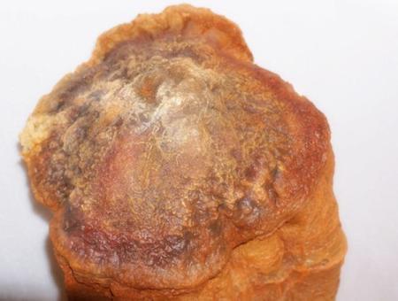 ABUIABACGAAgjdGXlwUo97uewwYw2AQ4xgM450x450 太歳、食べると不老不死になると伝えられる肉塊。