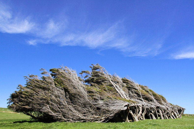 slope point 36 スロープポイント、曲がった木々が織り成す光景!