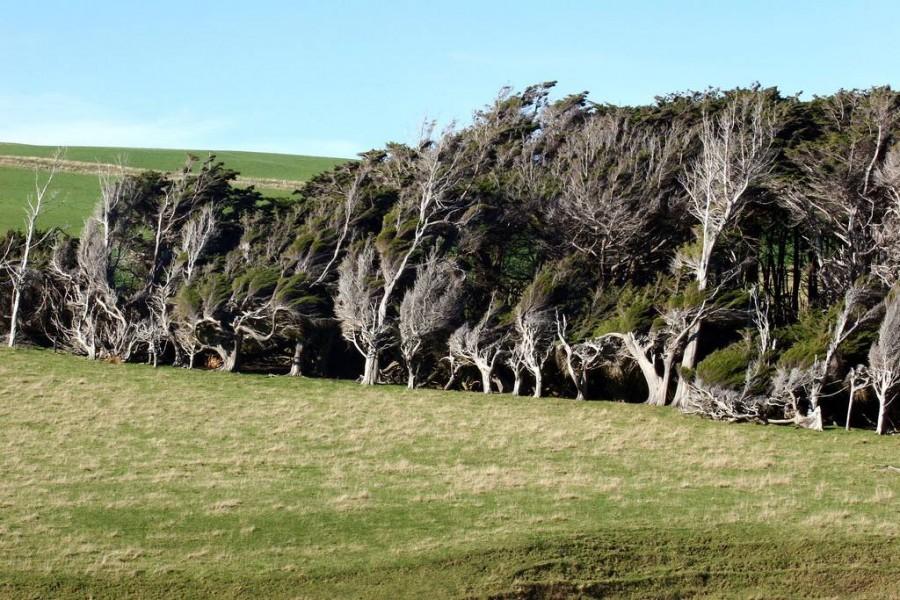 slope point new zealand 8 900x600 スロープポイント、曲がった木々が織り成す光景!