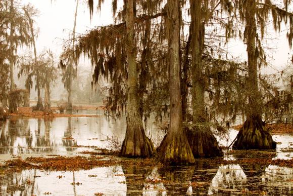 stm4e9607269705220111012 マンチャック・スワンプス、ルイジアナの幽霊沼。