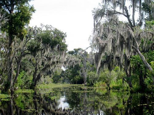 swamp マンチャック・スワンプス、ルイジアナの幽霊沼。