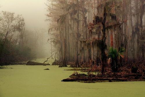 tumblr moykcu2kW21rtb96oo1 500 マンチャック・スワンプス、ルイジアナの幽霊沼。