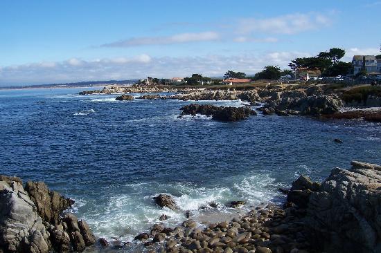 view of monterey bay コンドロクラディア・リラ。深海に住むハープ状の生物!