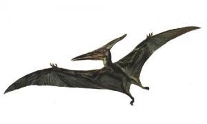 67c50906c4af4a9d0bd1d331465e5d9e プテラノドンは生存しているのか、各地で目撃される謎の翼竜!