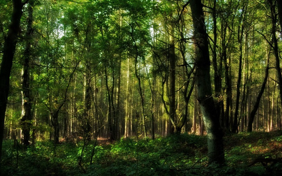 Green forests Jungle background 900x562 マイナスイオンの真相。科学的な単語でない言葉の流行。