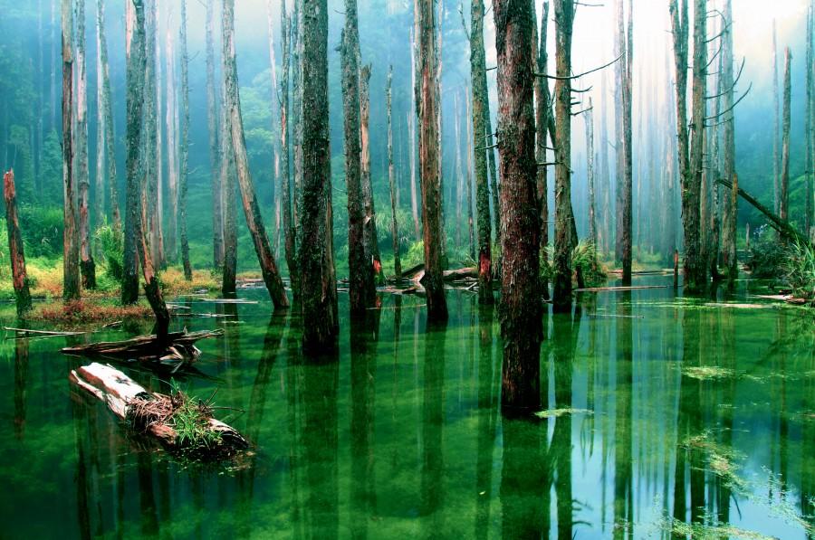 Immersed forest 900x597 マイナスイオンの真相。科学的な単語でない言葉の流行。