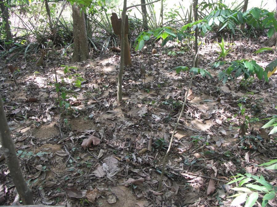 PICT2486 900x675 カンボジアの地雷原、今も残る多くの地雷。