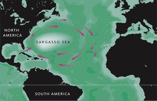 Sargasso バミューダトライアングル、最も有名な魔の海域!
