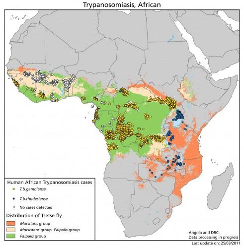 african trypanosomiasis e1329997857286 491x500 ツェツェバエの恐怖。永遠の眠りへといざなう虫。