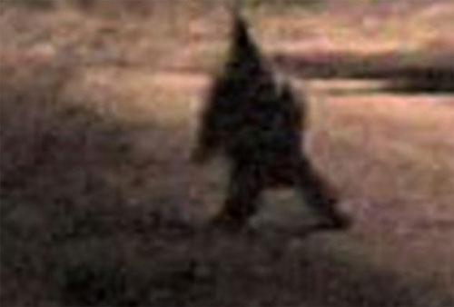 argentina gnome 妖精の写真、捏造判明も残された可能性。