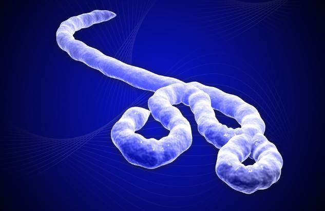 ebolavirus 15236 エボラ出血熱がギニアで猛威を振るう!