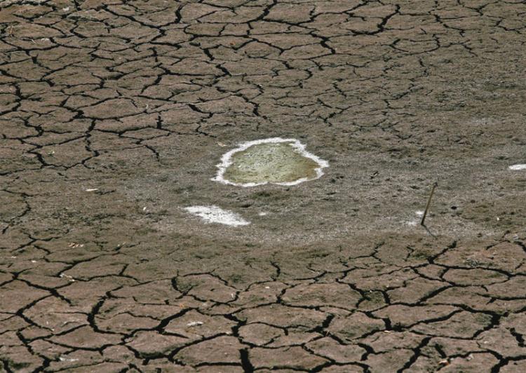 13 01 地球温暖化による食糧危機が警告される!