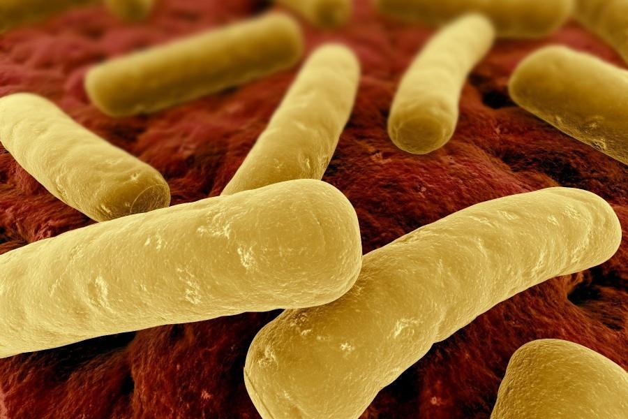 Clostridium difficile 900x600 ボツリヌス菌、自然界最強の細菌!