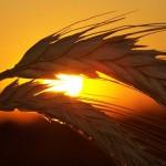 地球温暖化による食糧危機が警告される!