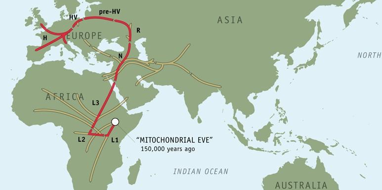 genomemap ミトコンドリア・イヴ理論、未だ明かされない人類のルーツ。