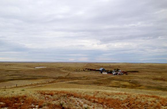 sig 110113 livestock hill 地球温暖化による食糧危機が警告される!